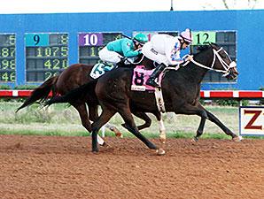 Ol Winedrinker Who wins the 2013 Veteran Stakes.