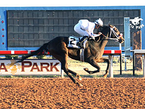 Ol Winedrinker Who wins the 2012 Zia Park Derby.