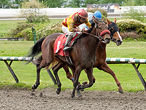 Ole's Miss wins the 2014 Ross McLeod Stakes.