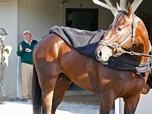 Orb after his workout at Churchill Downs