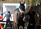 Orb Doing Well; Itsmyluckyday to Work