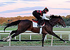 Orb Back on Worktab With Cigar Mile as Target