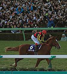 Orfevre Retires with Stylish Arima Kinen Win