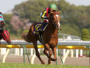 Orfevre Wins Japanese Two Thousand Guineas