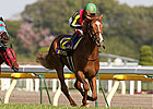 Orfevre Will Be &#39;Hard to Beat&#39; in Japan Cup