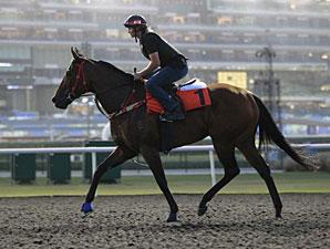 Ortensia - Dubai 2012
