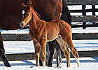 First Reported Foal for Our Entourage