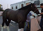 Preakness Winner Oxbow Leaves Pimlico