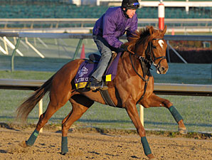 Pach Attack on the track for the Breeders' Cup.