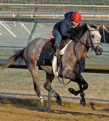 Final Workouts for First Dude, Paddy O'Prado