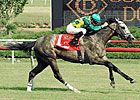 Paddy O&#39;Prado Rebounds in Colonial Turf Cup