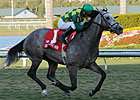 Maiden No More: Paddy O&#39;Prado Wins Palm Beach