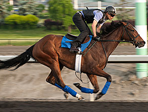 Paladine Bay preps for the Woodbine Oaks