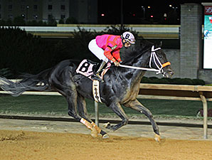 Pants On Fire wins the 2014 Wild and Wonderful Stakes.
