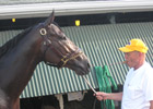 Stute: Papa Clem Likely For Haskell