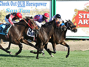 Papa's Flashy Girl wins the 2014 Scottsdale Handicap.