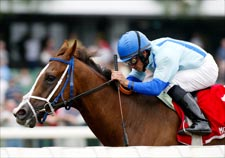 Park Avenue Ball Has Home Track Advantage in Breeders' Cup Dirt Mile
