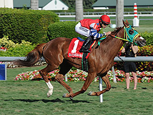 Parranda wins the 2014 Florida Sunshine Millions Filly & Mare Turf.