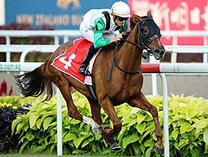 Parranda wins the Singapore Cup Feb. 22, 2015.