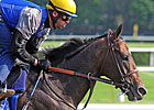 Paynter Beats Laminitis, Still Fights Colitis