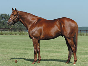 Peace Rules Sires  First Winner