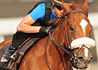 Woodbine Veterans Vie for King Edward Title