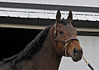 Peppers Pride in Foal to Tiznow