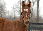 Peppers Pride Produces Distorted Humor Filly