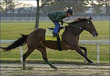 Perfect Drift, the Old Warrior, Tunes Up for Classic
