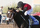 Persuasive Paul Captures Turf Paradis