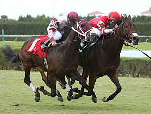 Pickapocket wins the 2010 Bonnie Heath Turf Cup.
