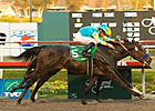 Pioneerof the Nile Turns in Bullet Move
