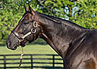 Pioneerof the Nile Fee at $60,000 for 2015
