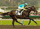 Stud Fee Set for Pioneerof the Nile