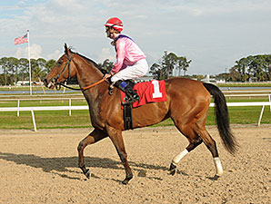 Please Explain wins the 2014 Suncoast Stakes.