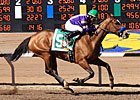 Plum Pretty Squishes Sunland Oaks Foes by 25 