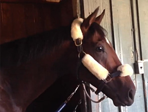 Point of Entry at his barn at Santa Anita 10/29/2012.
