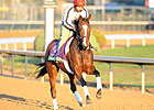 Tarrant With Loaded 'Pistol' in Breeders' Cup