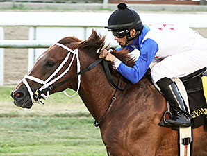 Potomac River wins the 2015 Sunset Stakes.