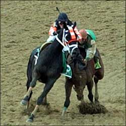 What a Finish! Afleet Alex Nearly Falls, Wins Preakness
