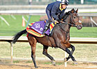Breeders&#39; Cup Chat: Ten Longshots to Consider