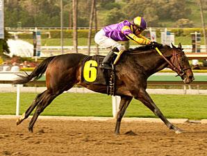 Premier Pegasus wins the 2011 San Felipe.