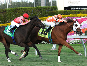 Presious Passion wins the 2009 Mac Diarmida.