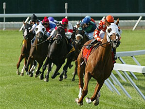 Presious Passion wins the 2009 United Nations.