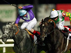 British Horses Dominate Races in Turkey