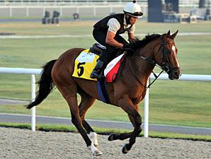Presvis preps for the 2010 Dubai Duty Free.