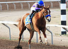 Undefeated Princess Arabella Retired