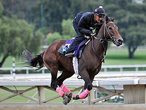Private Zone preps for the Breeders' Cup.