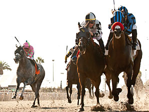 Private Zone wins the 2013 Pirate's Bounty Stakes.