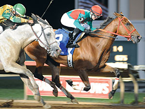 Proceed Bee Stands Out in Connally Turf Cup